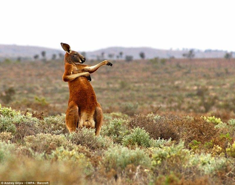 Найсмішніші фото тварин показали на конкурсі Comedy Wildlife Photography Awards 2017 - фото 326200