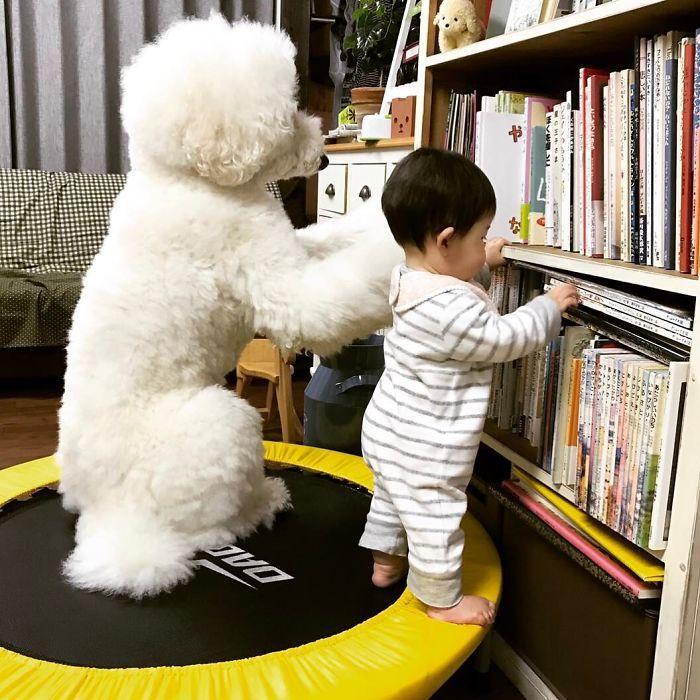 японки с собаками