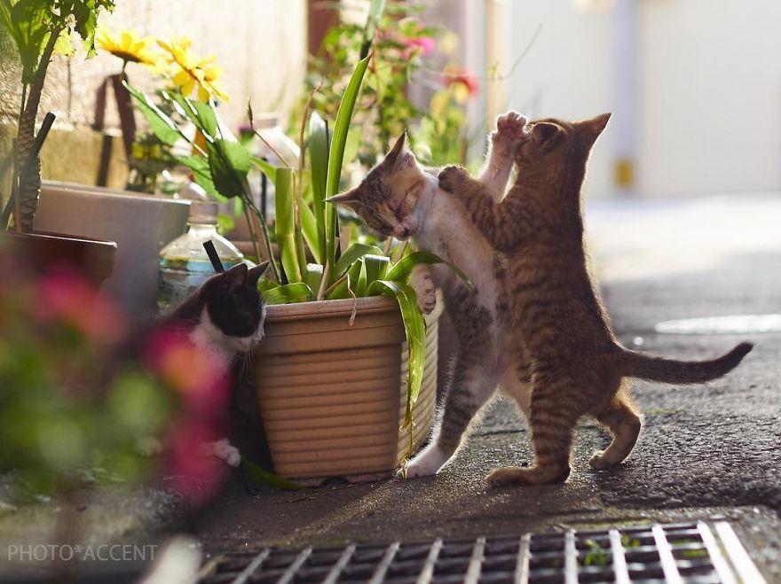 Фотограф доказал, что коты и ниндзя - это одно и то же - фото 347522