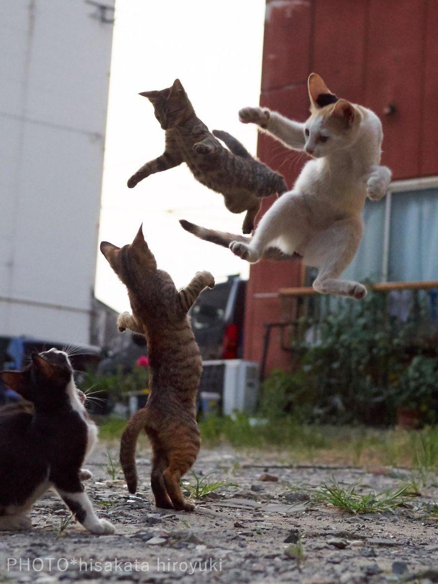 Фотограф доказал, что коты и ниндзя - это одно и то же - фото 347528