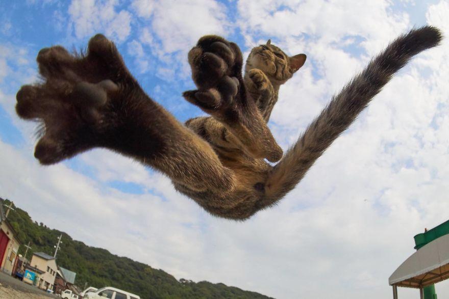 Фотограф доказал, что коты и ниндзя - это одно и то же - фото 347523