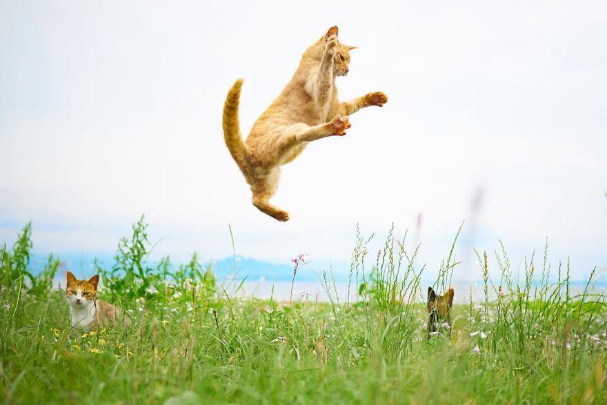 Фотограф доказал, что коты и ниндзя - это одно и то же - фото 347521
