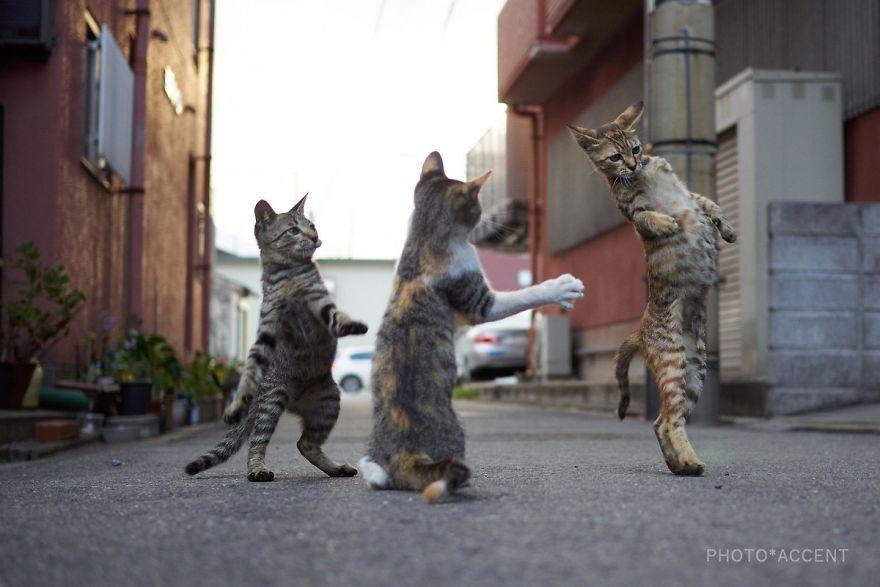 Фотограф доказал, что коты и ниндзя - это одно и то же - фото 347520