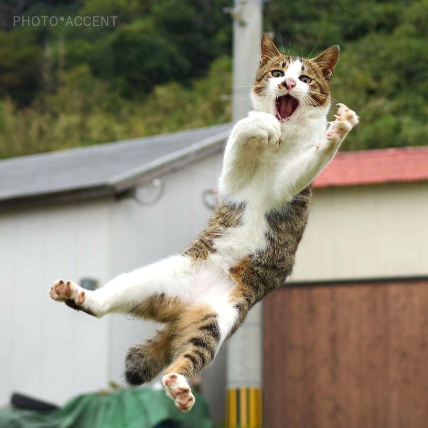 Фотограф доказал, что коты и ниндзя - это одно и то же - фото 347524