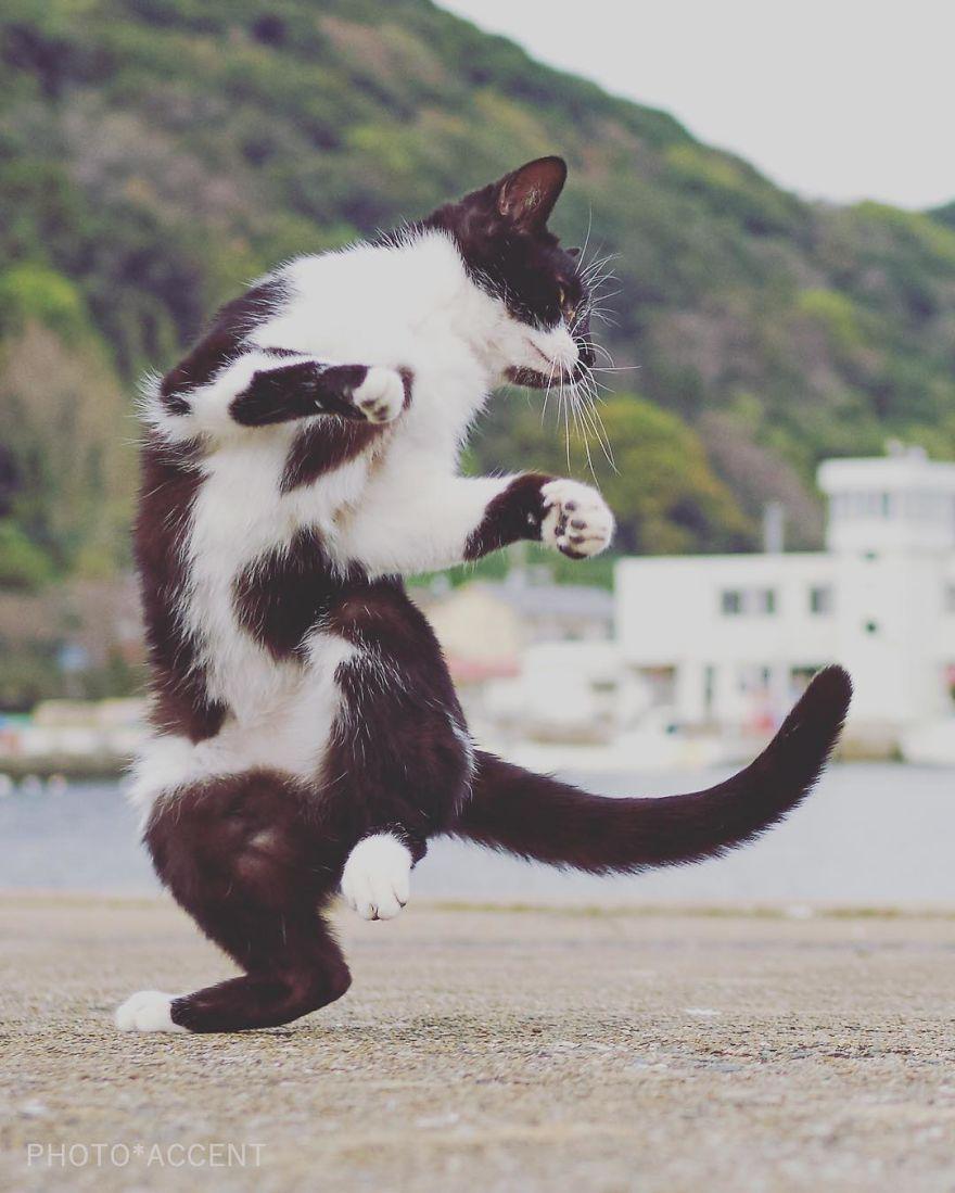 Фотограф доказал, что коты и ниндзя - это одно и то же - фото 347527