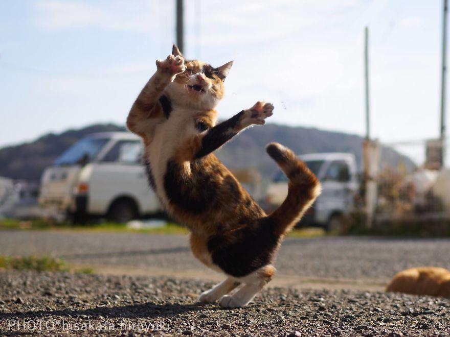 Фотограф доказал, что коты и ниндзя - это одно и то же - фото 347530