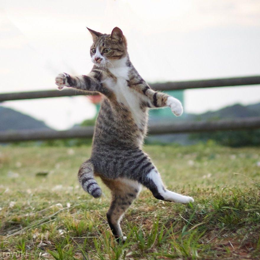 Фотограф доказал, что коты и ниндзя - это одно и то же - фото 347525