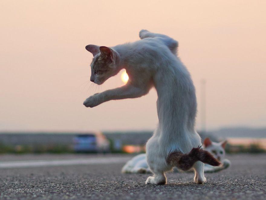 Фотограф доказал, что коты и ниндзя - это одно и то же - фото 347518