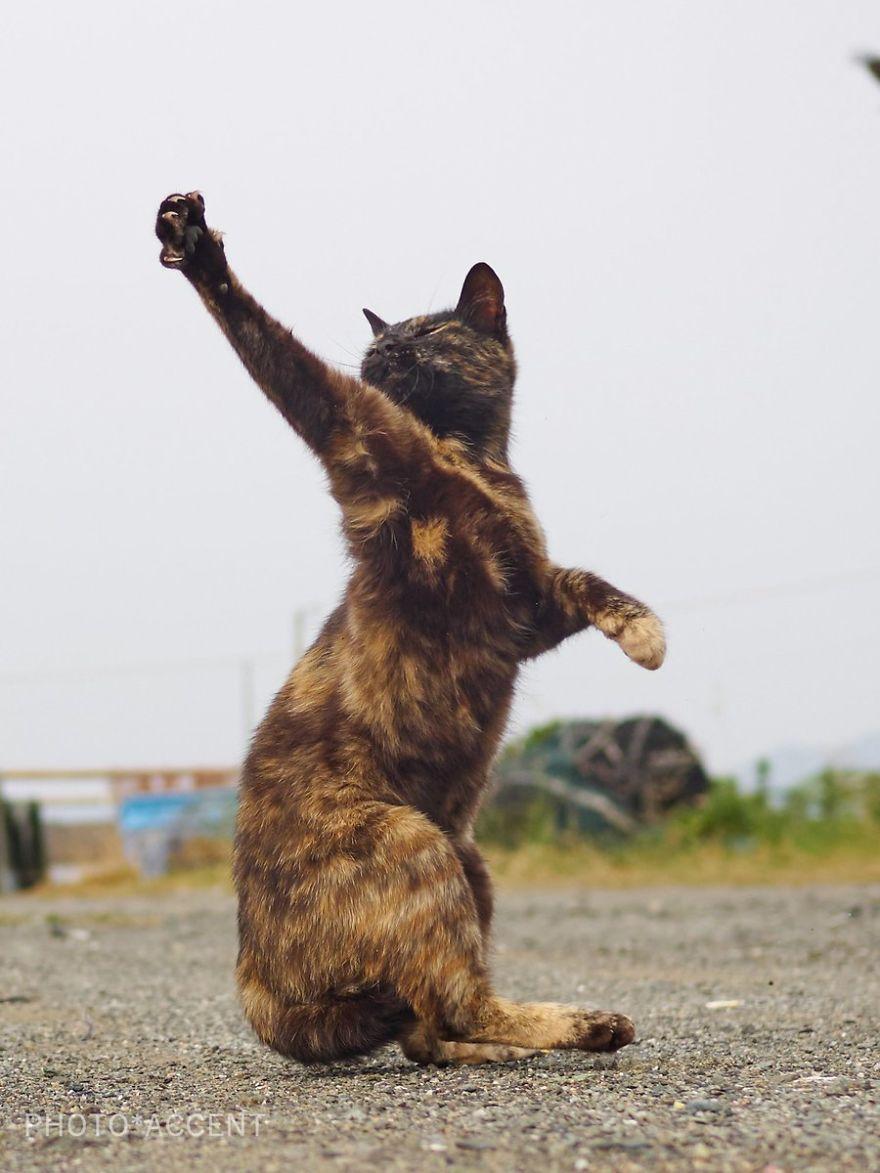 Фотограф доказал, что коты и ниндзя - это одно и то же - фото 347531