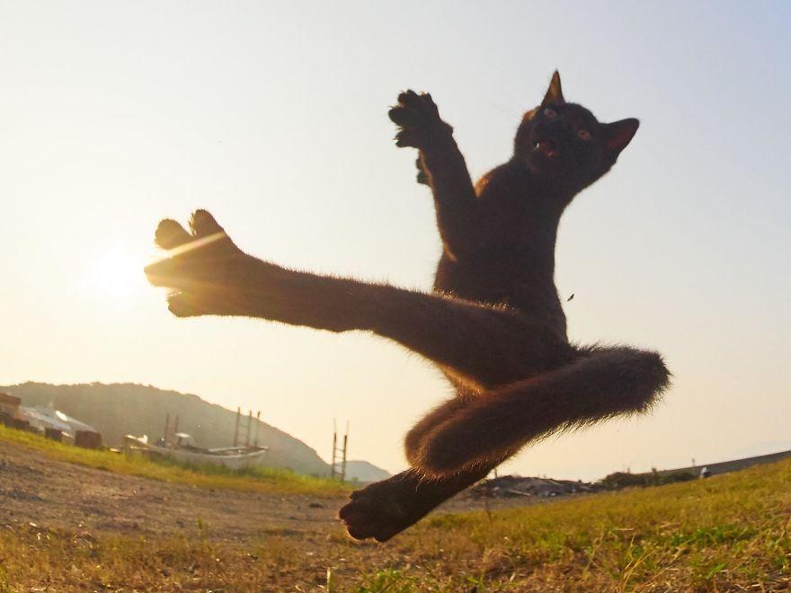 Фотограф доказал, что коты и ниндзя - это одно и то же - фото 347517