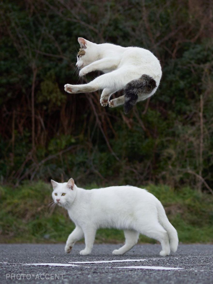 Фотограф доказал, что коты и ниндзя - это одно и то же - фото 347526