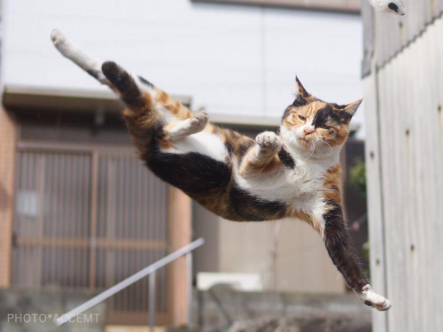 Фотограф доказал, что коты и ниндзя - это одно и то же - фото 347519