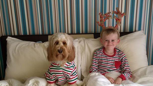 Завидуйте молча: собака получила на Рождество 68 подарков на 1500 долларов - фото 360525