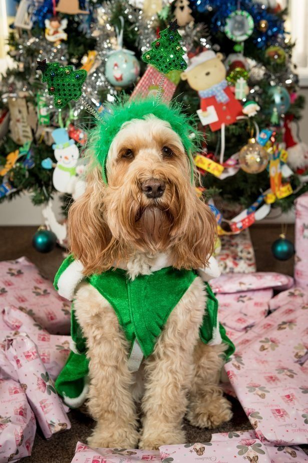 Завидуйте молча: собака получила на Рождество 68 подарков на 1500 долларов - фото 360527