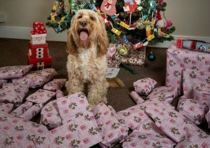 Завидуйте молча: собака получила на Рождество 68 подарков на 1500 долларов - фото 360523