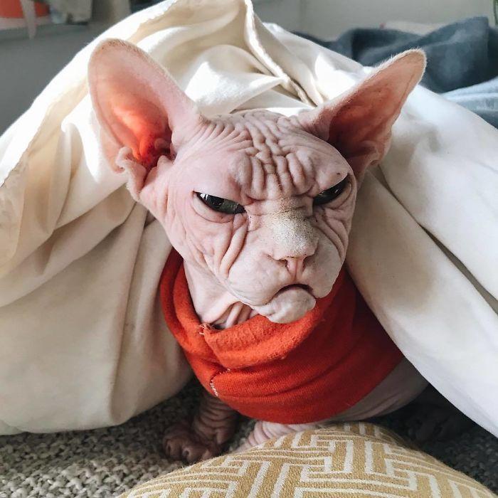 Малий злюка: мордочка цього кота змусить тебе його боятися - фото 379563