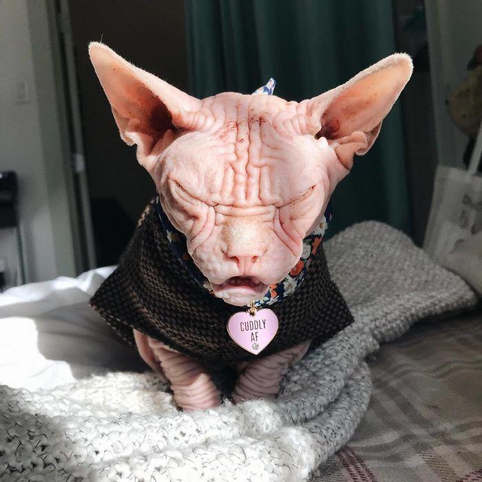 Малий злюка: мордочка цього кота змусить тебе його боятися - фото 379562