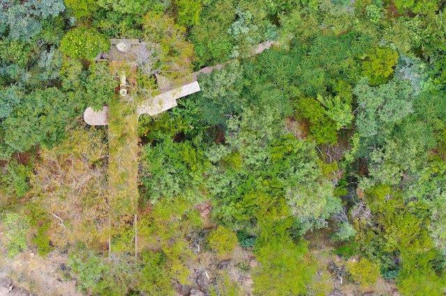 Ювелірно: у Африці звели надвузький будинок посеред лісу, аби не чіпати жодного дерева - фото 486571