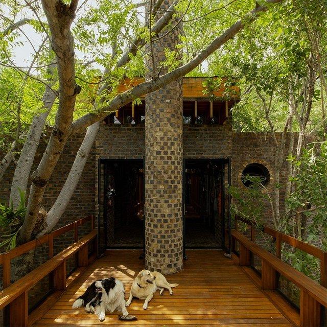 Ювелірно: у Африці звели надвузький будинок посеред лісу, аби не чіпати жодного дерева - фото 486578