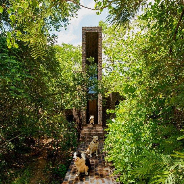 Ювелірно: у Африці звели надвузький будинок посеред лісу, аби не чіпати жодного дерева - фото 486579