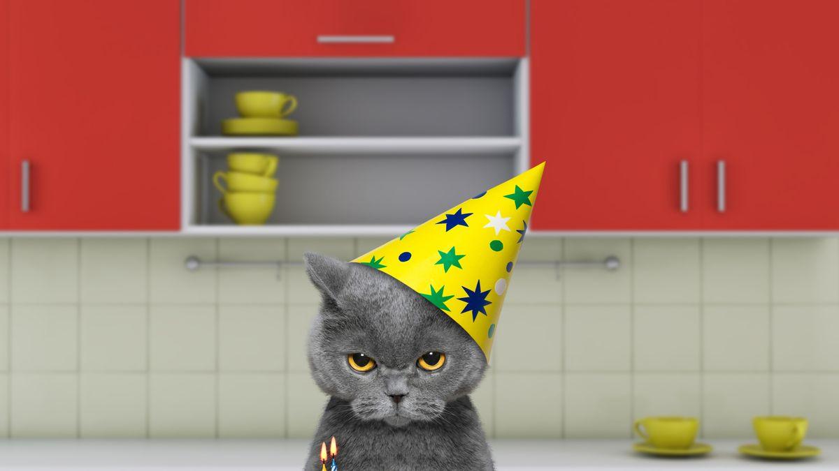 1 березня День котів в Україні 2019 - веселі фото котиків - Люкс FM