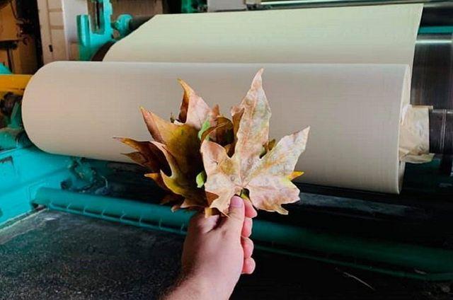 Знай наших: українські стартапери випускають папір з опалого листя - фото 495537