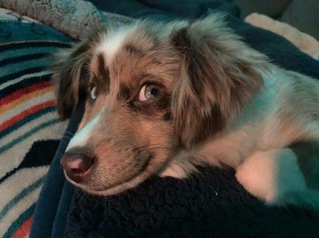 Люди запустили челлендж и делятся прикольными выражениями мордочек своих собак - фото 502707