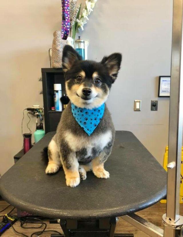 Люди запустили челлендж и делятся прикольными выражениями мордочек своих собак - фото 502712
