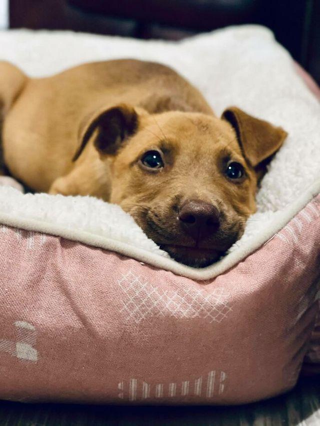 Люди запустили челлендж и делятся прикольными выражениями мордочек своих собак - фото 502713