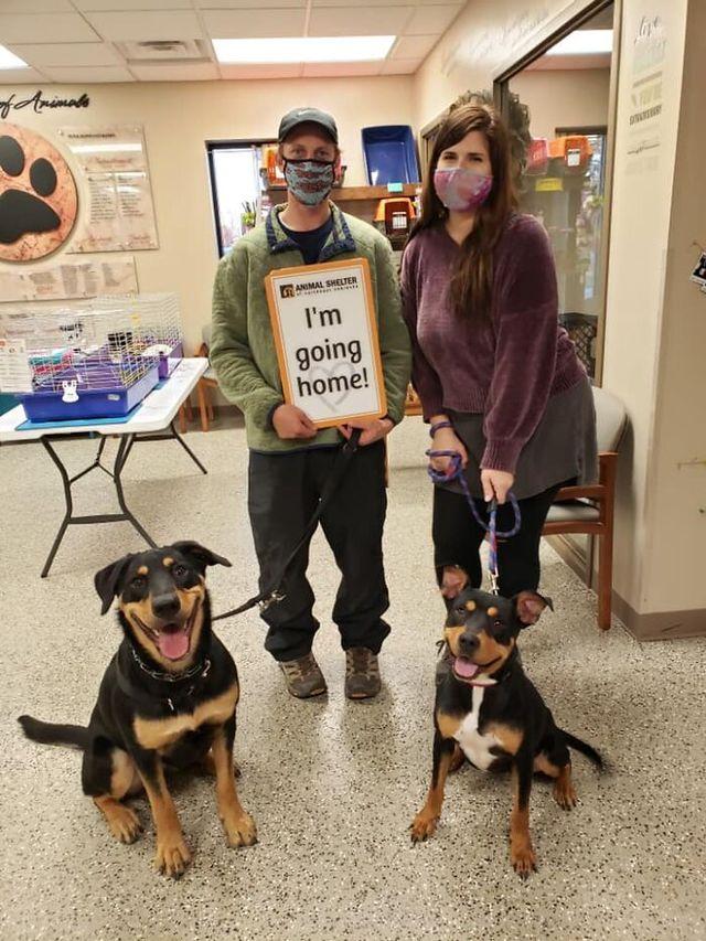 Люди запустили челлендж и делятся прикольными выражениями мордочек своих собак - фото 502717