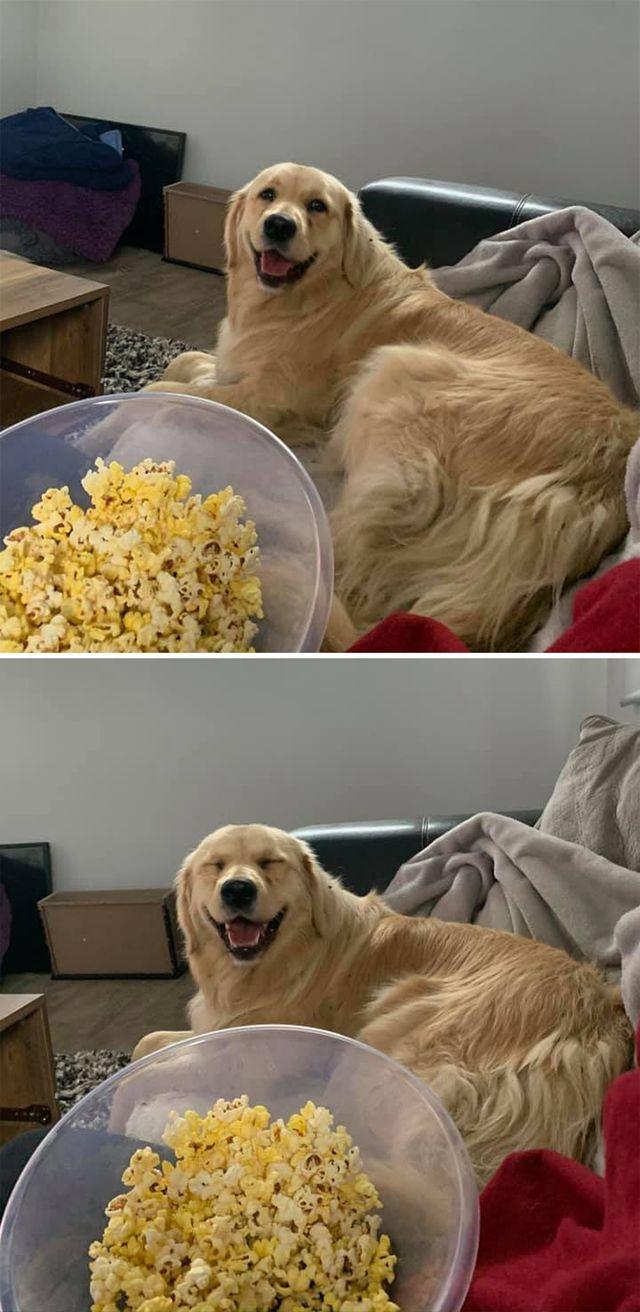 Люди запустили челлендж и делятся прикольными выражениями мордочек своих собак - фото 502719