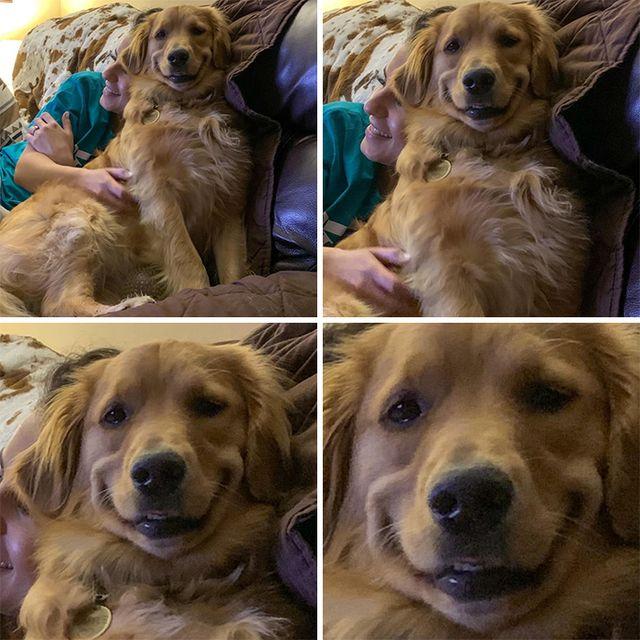 Люди запустили челлендж и делятся прикольными выражениями мордочек своих собак - фото 502720