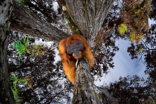 Тварини в середовищі їх проживання - фото 510137