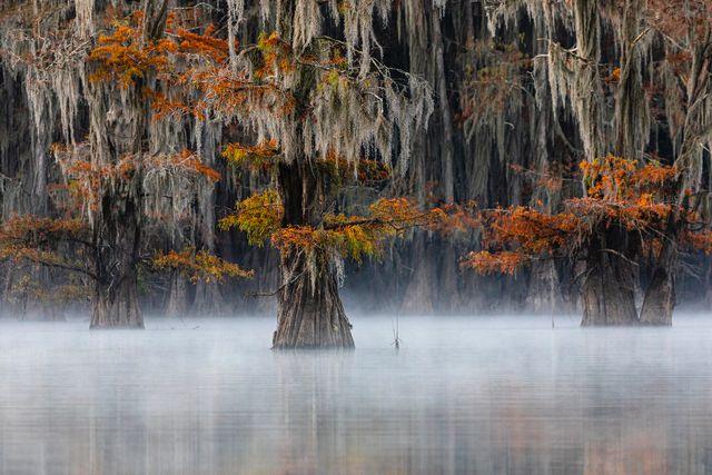 'Світ йде догори дригом' - найкраще фото природи за версією World Nature Photography Award - фото 510146
